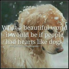 What a beautiful world it would be if people had hearts like dogs.