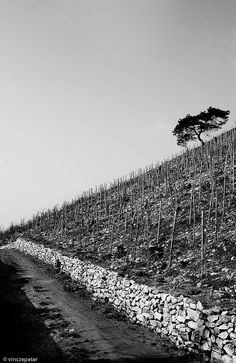 The Hill by .vpeter, via Flickr Hungary, City Photo, Explore, Pictures, Photos, Photography, Photograph, Fotografie, Photoshoot