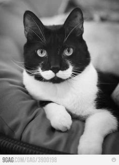 Being a kitty like a sir! haha