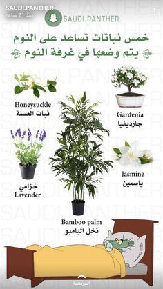 Farming, Agriculture, House Plants Decor, Plant Decor, Flower Planters, Garden Planters, Container Herb Garden, Inside Plants, Home Vegetable Garden