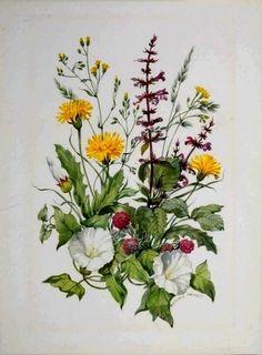 Watercolor Cards, Watercolor Illustration, Watercolor Flowers, Vintage Botanical Prints, Botanical Drawings, Botanical Flowers, Botanical Art, Nature Sketch, Nature Artists