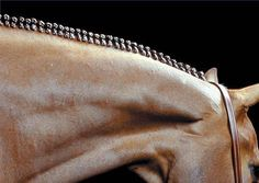 15 Braiding & Banding Jobs That Will Blow Your Mind « HORSE NATION