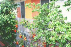 Courtyard - The Original Backpackers Hostel