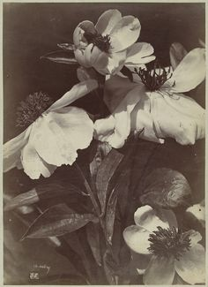 Flower Still Life with Peonies | Charles Aubry | 1860-1870 | Rijksmuseum | Public Domain Environment Concept Art, Dark Photography, Aesthetic Pictures, Art Inspo, Peonies, Art Reference, Cool Pictures, Art Prints, Abstract
