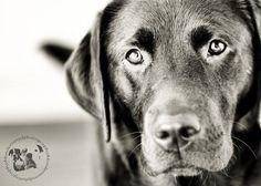 Dynamic Views of the Labrador with Jason Corbett – Its a Lab Thing