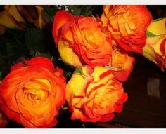 Circus Roses <3