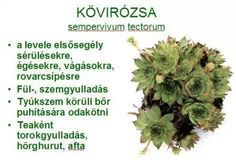 Kövirozsa Doterra, Superfoods, Healthy Lifestyle, Health Fitness, Herbs, Therapy, Flower, Live, Cold Sore