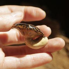 grzyb. ceramika / fungi, ceramic. /// http://karolina-g.blogspot.com/2013/08/pogiety.html
