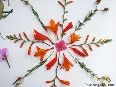 Nature Mandalas   Louise Gale Mixed Media Botanical Mandala Color Artist