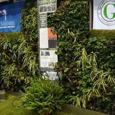 Green Living Wall Gallery | Green Living Technologies Vertical Garden Plants, Living Roofs, Plant Wall, Growing Plants, Gallery, Green, Design, Roof Rack, Living Walls