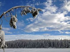 Bald Lake, Alaska