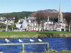 Town Impressions | Royal Burgh of Peebles, birds of the Tweed bank.