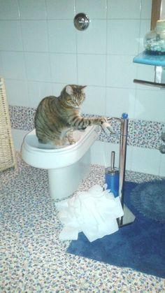 gatti in azione