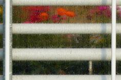 margriet zwarthoed       flickr