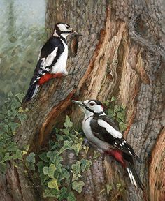 painting of spotted woodpeckers, painting of woodpeckers, hilary mayes, british . Butterfly Pictures, Bird Pictures, British Wildlife, Wildlife Art, Spotted Woodpecker, Bird Identification, Realistic Oil Painting, Canvas Painting Tutorials, Unique Trees