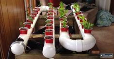 diy pvc pipes hydroponic systems
