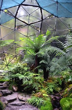 Greenhouse in Scotland / Photo by Yves Drieghe