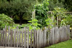 Want that natural fence.  Maybe pointed pickets or this fence of many size pickets.  I think I really like this one.  How primitive.