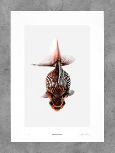 Morbid Being N° 5 - Bienvenue Studios Goldfish, Fascinator, Bee, Concept, Fancy, Studio, Aesthetics, Animals, Headdress