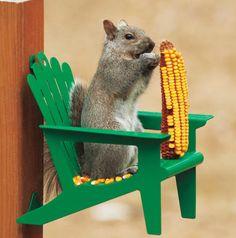 Adirondack Chair Squirrel Feeder - Diffuse backyard tension between squirrels and wild birds with humor. The Adirondack Chair Squirrel Feeders cleverly convert pesky squirrels into welcomed backyard comedians.