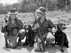South Vietnam, 1967. Two Labrador sniffer dogs, Justin and Cassius and their handlers. The dogs were responsible for locating Viet Cong fighters and enemy installations. Picture: Australian War Memorial CAM/67/0411/VN