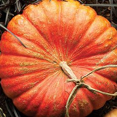 Cinderella/Rouge Vif d'Etampes France flattened top and ridged, deep orange Healthy Candy, Cinderella Pumpkin, Fall Halloween, Halloween Ideas, Fall Harvest, Fall Pumpkins, Fruits And Veggies, Orange Color, Seeds