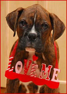 Valentine's Day boxer.  you dont have to wear that sign for me to love you!!