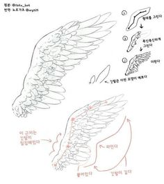 🌸~Credits to the artist for these beautiful wings~🌸 Drawing Reference Poses, Drawing Skills, Drawing Techniques, Drawing Tips, Wings Drawing, Drawing Base, Art Drawings Sketches, Animal Drawings, Ange Anime