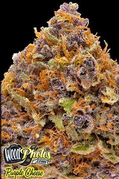 Purple Cheese Marijuana Strain! Wanna try this toooo bad!!
