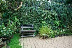 Quem tem um pouco mais de espaço, consegue fazer uma parede verde no ambiente (Foto: Shutterstock)