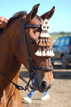 caballo de doma vaquera