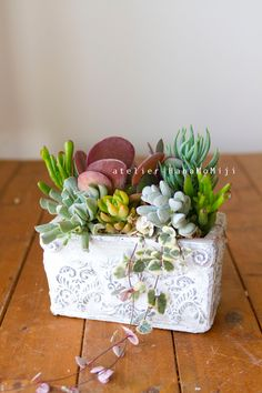 【1点もの】アンティーク風陶器の多肉植物寄せ植え by 87momiji フラワー・ガーデン その他 Types Of Succulents, Succulents In Containers, Cacti And Succulents, Planting Succulents, Cactus Plants, Planting Flowers, Succulent Gardening, Succulent Terrarium, Inside Plants