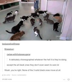 48 Of The Funniest Cats On The Internet - Funny Gallery