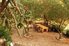 Restaurant Robinson, Insula Hvar Restaurant, House Styles, Plants, Home Decor, Decoration Home, Room Decor, Diner Restaurant, Plant, Restaurants