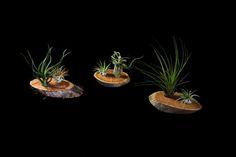 2-plant-wood-arrangement.jpg (576×384)