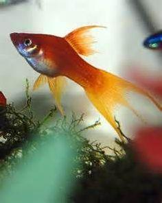 Fish - sweet image