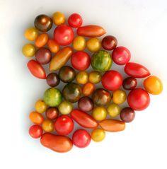 Colorful Wild Wonder Tomatoes   #organic  http://www.natureandmore.com/telers/frank-de-koning