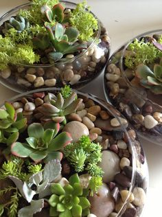 succulent centerpieces - Google Search