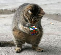 Funny Animal Pictures - Funny Animal Quotes - - Seriously laughing out loud with tears streaming down my faceshouldn't be that funny but it certainly gets me going every time. The post Funny Animal Pictures appeared first on Gag Dad. I Love Cats, Crazy Cats, Cool Cats, Funny Puzzles, Tier Fotos, Funny Animal Pictures, Funny Photos, Pet Pictures, Hilarious Pictures