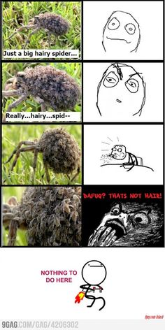 Just a Hairy spider, you say? <--- I'm not even afraid of spiders and yet... *SCREAM*
