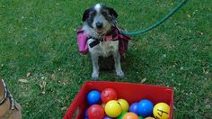 Fauna, la perra que dejó la calle para rehabilitar a chicos discapacitados – AB Magazine