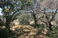 San Juan Creek Trail, Caspers Wilderness Park, Orange County, CA