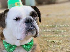 March2015 Fenway - Bulldog - St. Patrick's Day - Green