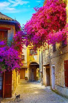 As flores cobrem as ruas históricas de Provence, na França.