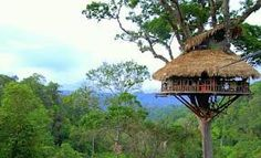 Laos Tree House Accessible Only by Zip Line