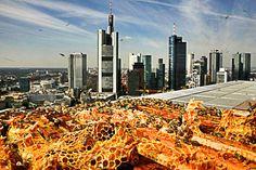Außergewöhnliche Hotels Deutschland – Das Jumeirah in Frankfurt