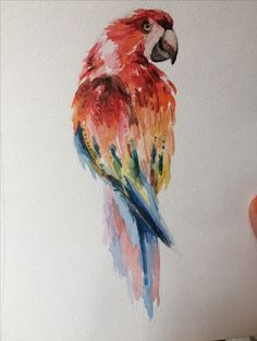 Trendy Ideas for bird sketch book Colorful Bird Tattoos, Watercolor Paintings, Original Paintings, Bird Sketch, Bird Illustration, Illustrations, Love Canvas, Bird Prints, Bird Art