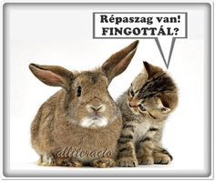 Kangaroo, Cute Pictures, Rabbit, Survival, Van, Memes, Funny, Animals, Laughing