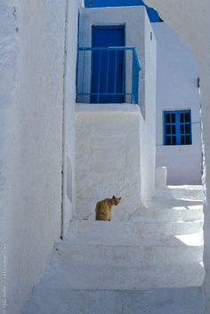 A whitewashed street in Thirasia near Santorini one of the famous Greek Islands