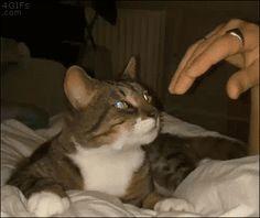 Gif - Ah, une main enchanteresse...